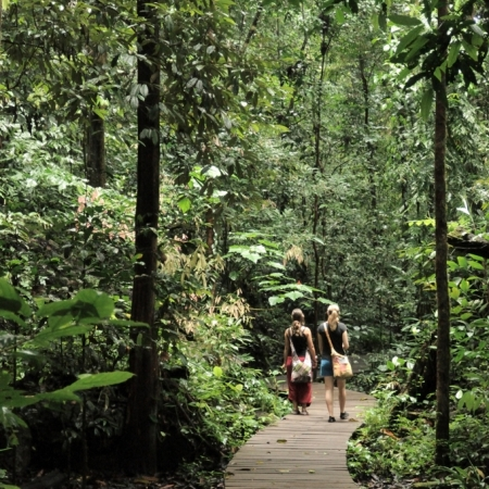 People on a boardwalk, Mulu National Park and World Heritage site, Sarawak, Malaysia.