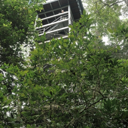 Tree top tower, Mulu National Park and World Heritage site, Sarawak, Malaysia.